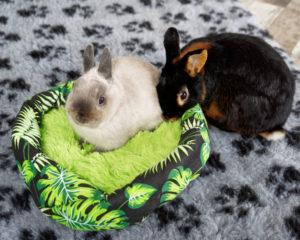 samiec czy samica królika