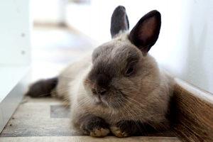 język ciała królików