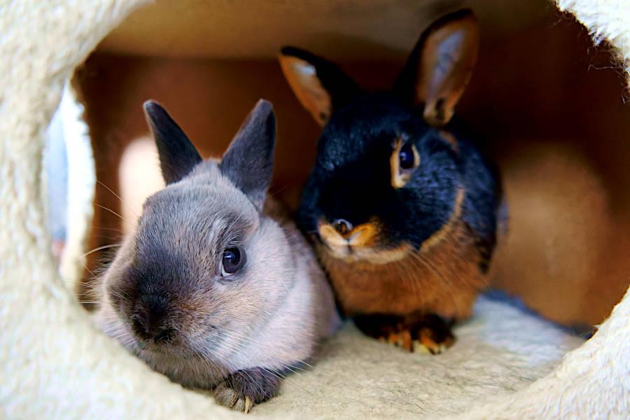 galeria królików