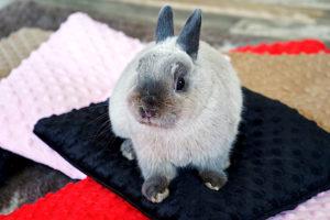 potrzeby królików