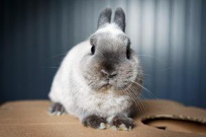 choroby odzwierzęce od królika