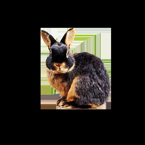 dieta królików