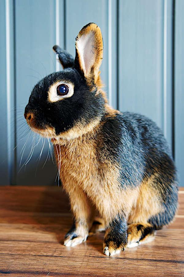 koszt utrzymania królika