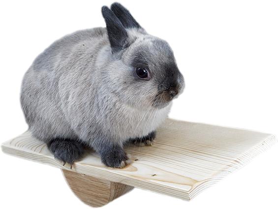O królikach